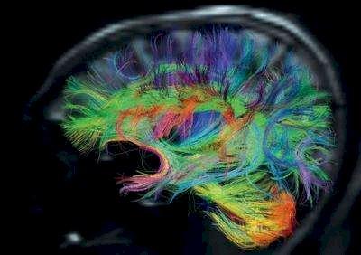 我们的大脑使用不同的放电模式来存储和回放记忆